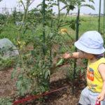 食育なら子どもと野菜作り~野菜作りと子どもへの効果~