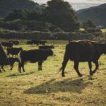 求められる家畜のアニマルウェルフェア!家畜の5つの自由を叶えよう