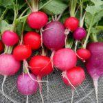 旬の野菜料理を食べよう~Chiisanate:旬の野菜と料理の例