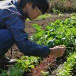 初心者が有機農業で失敗せず生活するには?脱サラ農家の私の体験談