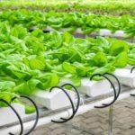 昔の野菜と今の野菜 味や栄養価に違いはあるの?まずくなった今の野菜
