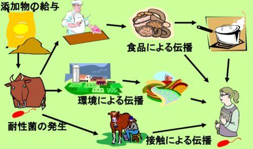 家畜から人間に侵入してくる薬剤耐性菌の経路(説明画像)