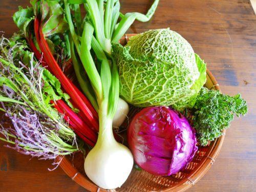 日本野菜から西洋野菜までの写真