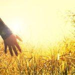 なぜ農家は有機jas認証を取得するのか【結論:信用を売るためです】