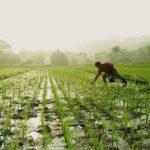 田舎暮らしの農業は失敗する?移住者がその情報に反論する!!